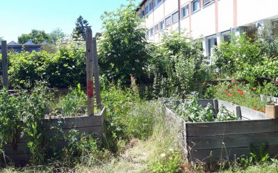 Mikroprojekt Erlebnisschulgarten an der MS Kiderlinstraße